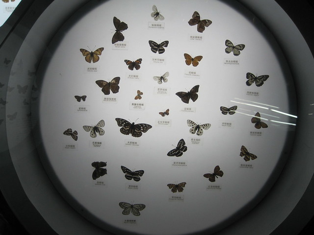 蝴蝶、昆虫类 (3)