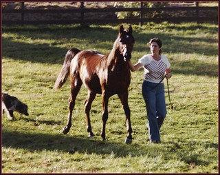 Toi Soldier as a Yearling