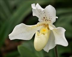 Orchideeënhoeve (Orchid Farm)