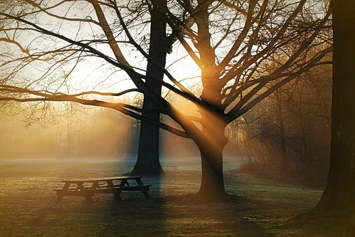 morning trees sun sunshine misty sunrise dawn shadows connecticut lawn rays beams picnik sunbeams wethersfield newenglandusa rayoflightmorning picniktablegriswoldsville sallyobrienlight
