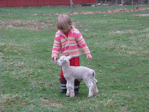 Miss C and her bummer lamb