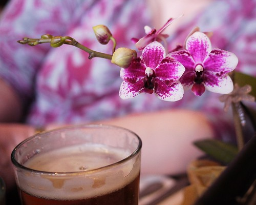 Phalaenopsis and beer
