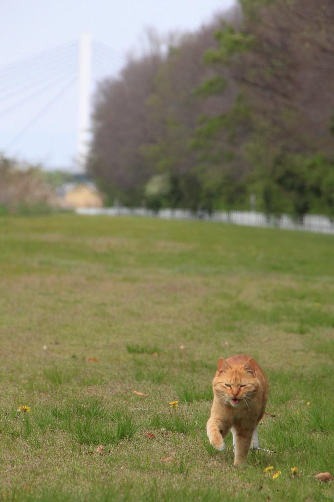 たんぽぽとねこ2 [Dandelion & Cat2] 1