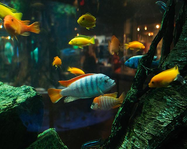 Aquarium Scene Fish in the aquarium adjacent to the Stingr ...