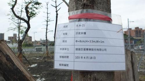 劉東啟認為我們欠缺對待樹的文明