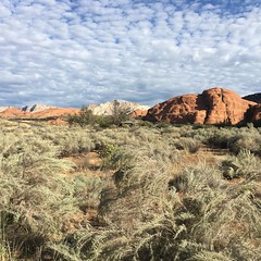 Snow Canyon State Park. After camping here last night, I'm even more excited to run through this area tomorrow. #stgeorgemarathon