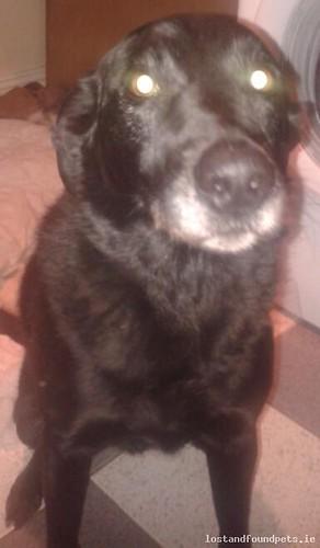 [Reunited] Thu, Sep 15th, 2016 Lost Male Dog - Waterfront, Bailieborough, Cavan