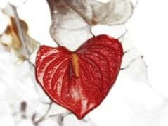 flower, leaf, heart, red,