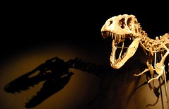 close-up(0.0), tyrannosaurus(1.0), skeleton(1.0), macro photography(1.0), dinosaur(1.0), darkness(1.0),