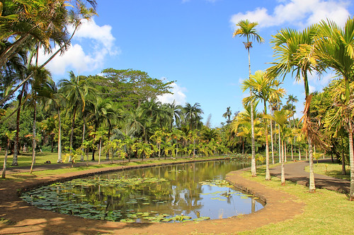 green nature water reflections garden palms botanical island maurice ile lilies tropical mauritius pamplemousses 550d sirseewoosagurramgoolam