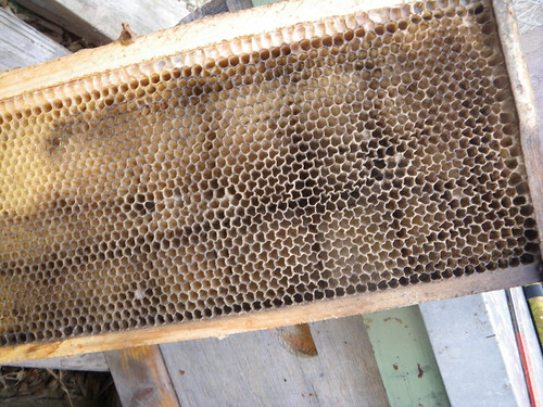 mould in the hive