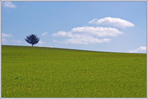 The Tree on the Hill  (EXPLORE) - 無料写真検索fotoq