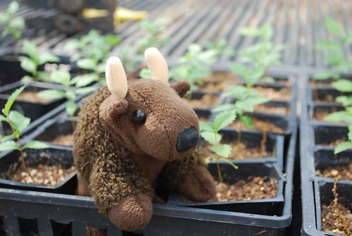 Let's Plant with Buddy Bison!
