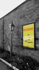 Woodbine Cigarette