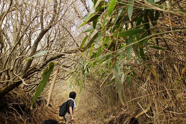 20110429_塔ノ岳(表尾根)_0012