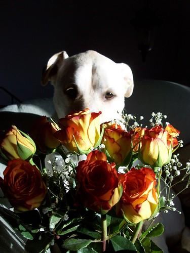 Zeus_ValentineRoses_21511d