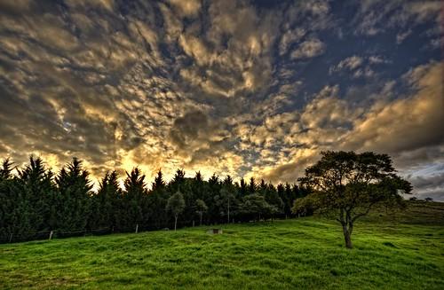 sky tree grass high dynamic australia kangaroo valley nsw range hdr highdynamicrange