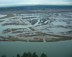 Nisqually NWR Estuary Restoration Project