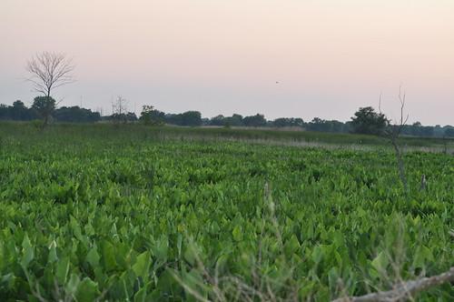 landscapes spring sunsets heinz nwr