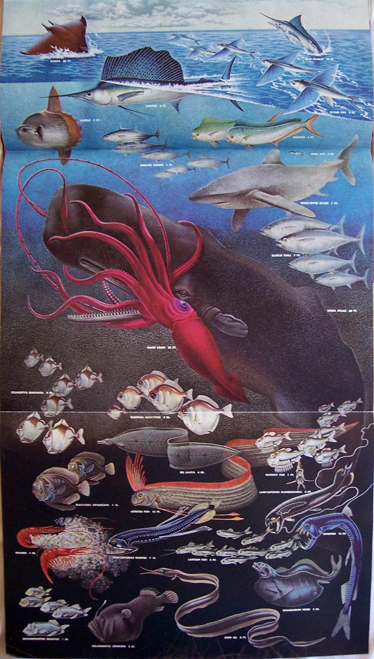 Colossal Squid Vs Sperm Whale