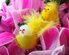 ...una serena giornata a tutti voi......Buona Pasqua.. by adriana p. 蠍/44Livorno