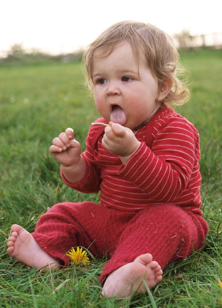 Dandelion tasting