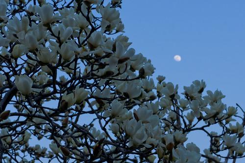 sunset moon landscape sony magnolia sendai nex5 sel1855