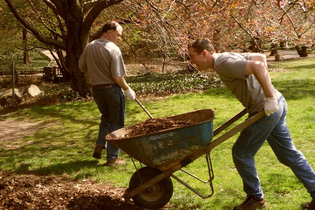 Mulch is highly beneficial for trees, not to mention loads of fun to spread. Photo by Kathryn Littlefield.
