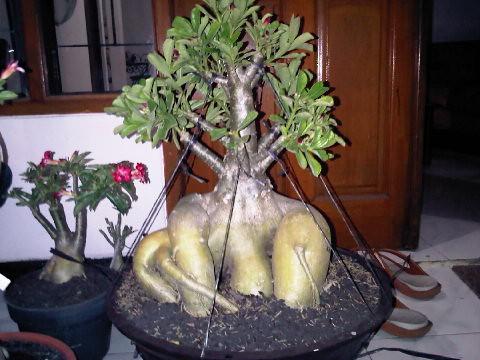 Семена цветов овощей и редких экзотических растений
