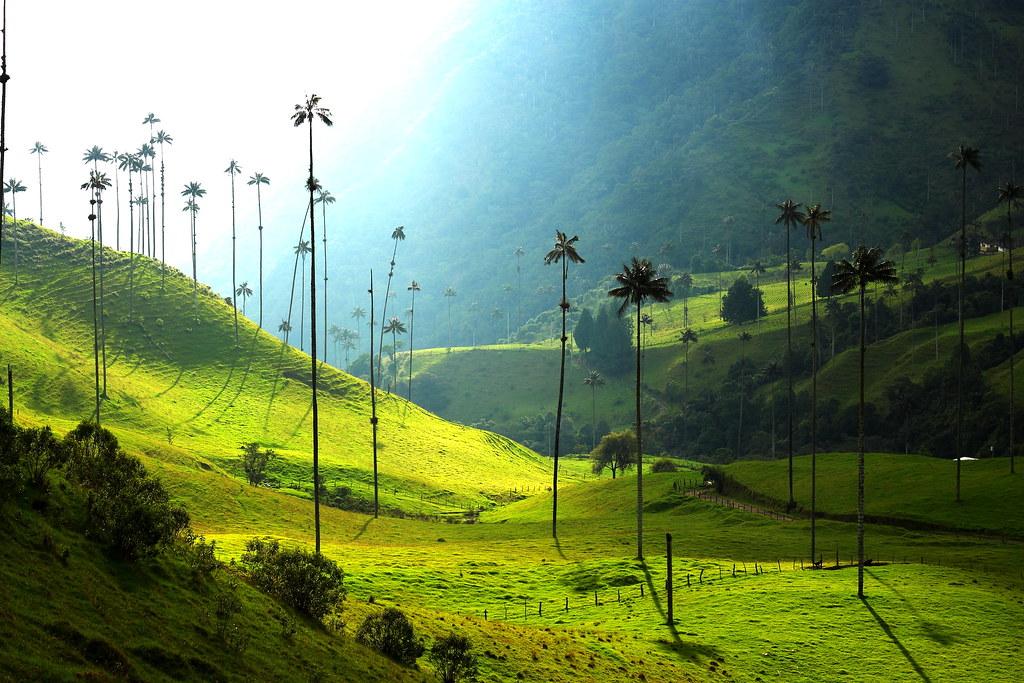 Imagen del Valle de Cocora y sus Hermosas Palmas de Cera