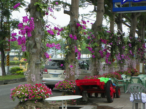 TAITUNG - THE SECOND BIGGEST CITY ON PACIFIC OCEAN COAST - CITYSCAPE - ORCHID FLOWERS ON SIDEWALK TREES