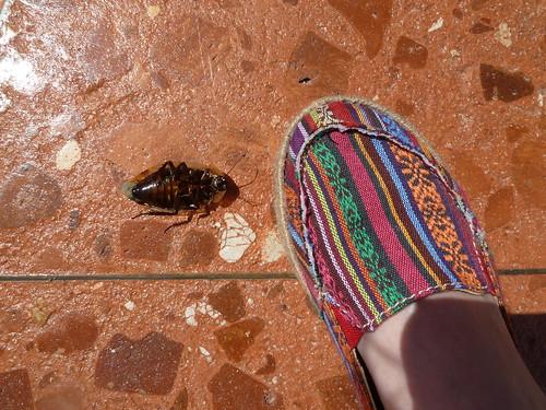 Giant Dead Cockroach