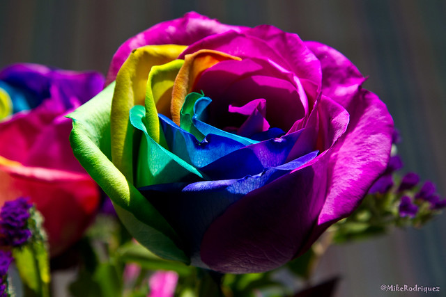 Tie dye roses momday11 8 flickr photo sharing for How to make tie dye roses