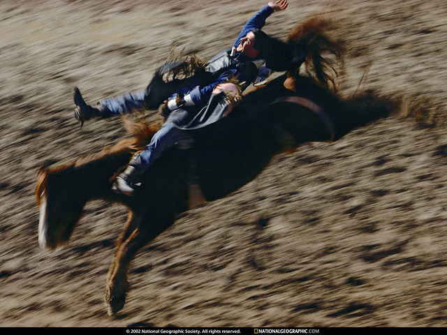 Bronc Rider, Tucson, Arizona, 1998, by William Albert Allard