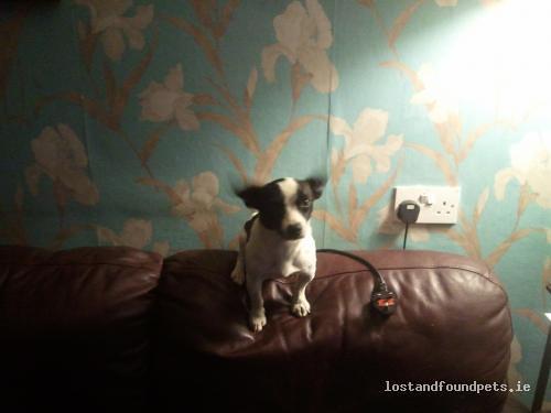 Mon, Jun 20th, 2011 Found Male Dog - Oola, Tipperary, Limerick