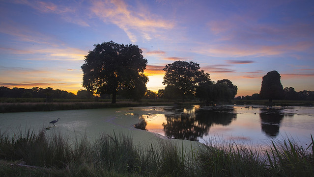 Sunrise in Bushy Park
