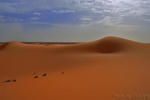 shadow texture landscape sand waves desert dunes saudiarabia الصحراء canonefs1855 صحراء رمال رمل طعس المملكةالعربيةالسعودية canon400d الرمل خطوط نفود الرمال كثبان تموجات تموج نفد