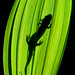 Salamander Silhouette -- Great Smokies, NC