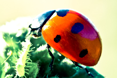 Pop Art - Ladybird