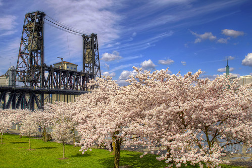 Steel Bridge and Cherry Blossom Trees in Portland Oregon - HDR