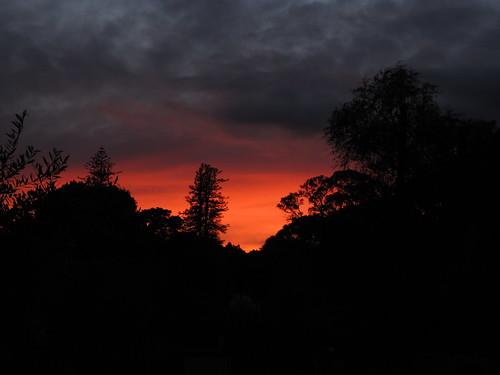 pine sunrise norfolk gisborne hexton