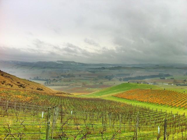 Waipara Valley from just above Greystone