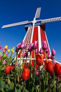 Windmill Up Close