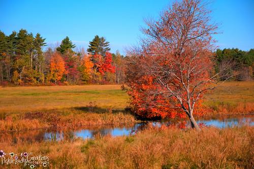 fall water leaves nikon stream maine scenic foliage d90 18105mm sabbatus