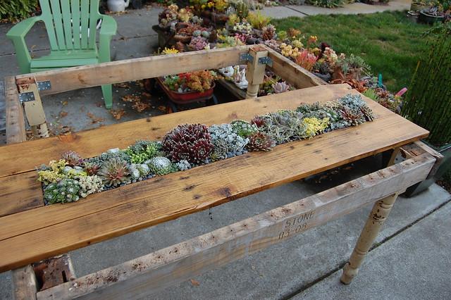 Diy succulent pallet table far out flora for Pallet succulent garden