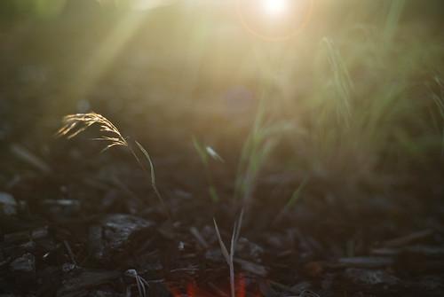 sunset summer copyright sun west set lens photography 50mm photo washington nikon flickr photographer image photos pics d f14 c cities pic 11 images stephen photograph flare wa rays d200 nikkor tri richland tricities 2011 99353 vangorkum
