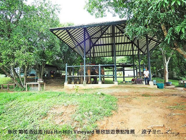 華欣 葡萄酒莊園 Hua Hin Hills Vineyard 華欣旅遊景點推薦 43