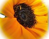 Flower by Jane Photo1