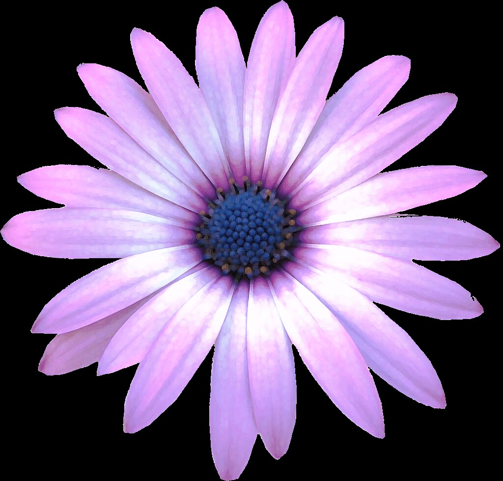 Purple Daisy Flower: Purple Daisy Flower Clipart, 15cm Paint Daubs