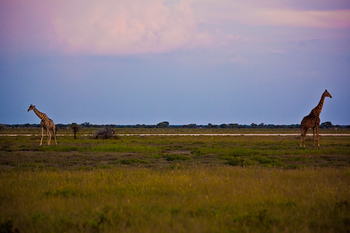 Travel Africa Namibia Giraffe Safari